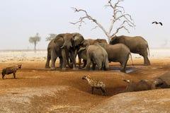 Elefanter som sörjer deras döda Royaltyfria Foton
