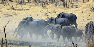 Elefanter som samlas på en waterhole med dammflyg Royaltyfria Foton