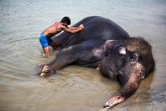 Elefanter som tvättar sig i floden Arkivbild