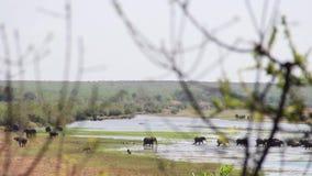 Elefanter som vandrar från avlägset