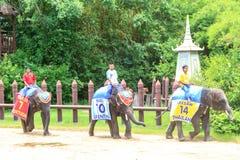 Elefanter spelar en lek Arkivbild