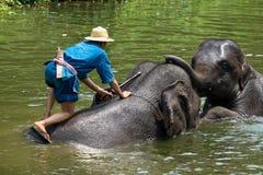 Elefanter tar ett bad Royaltyfri Fotografi