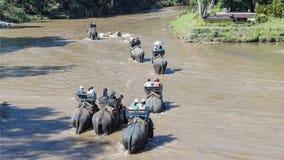 Elefanter turnerar Arkivbilder