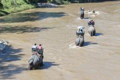 Elefanter turnerar Royaltyfri Bild
