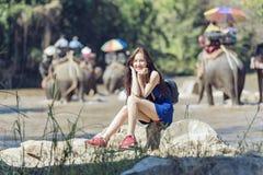 Elefanter turnerar Fotografering för Bildbyråer