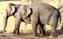 elefanter två Royaltyfri Bild