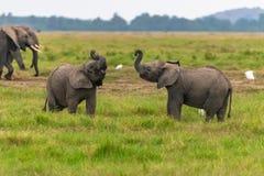 elefanter tv? barn arkivfoto