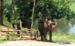 Elefanter vilar på Royaltyfria Bilder