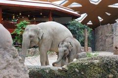 Elefanter Zurich zoo arkivfoton
