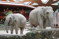 Elefanter Zurich zoo royaltyfri fotografi