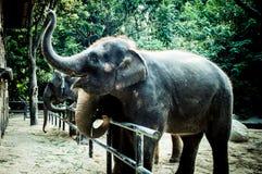 Elefanterna i zoo Arkivbild