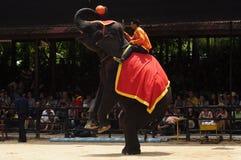 Elefanterscheinen, ein Elefant spielt Basketball Lizenzfreie Stockfotos