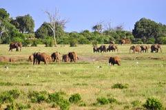 Elefantes África Imágenes de archivo libres de regalías