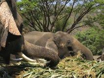Elefantes Imagen de archivo libre de regalías