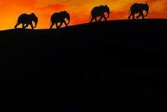 Elefantes Foto de Stock