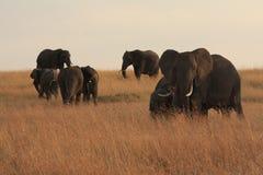Elefantes Fotos de archivo