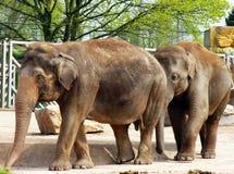 Elefantes Imagen de archivo