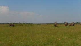 elefantes video estoque