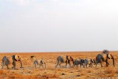 Elefantes Fotografia de Stock Royalty Free
