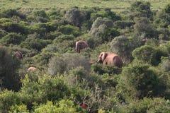 Elefantes fotografía de archivo