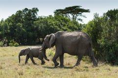 Elefantes africanos da mãe e do bebê Fotografia de Stock