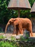 Elefantes africanos en el parque zoológico Imagenes de archivo