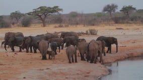 Elefantes africanos en la sabana almacen de metraje de vídeo