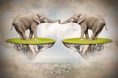Elefantes cariñosos. Imagenes de archivo