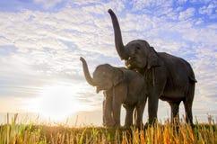 Elefantes con el cielo azul Imagenes de archivo