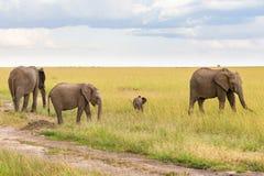 Elefantes con un pequeño becerro en la sabana Foto de archivo