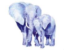 Elefantes da matriz e do bebê Ilustração Royalty Free