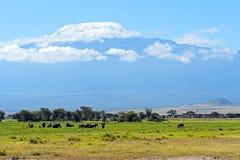 Elefantes de Amboseli Foto de Stock Royalty Free