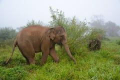 Elefantes de Chaing Rai Tailandia Imágenes de archivo libres de regalías