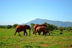 Elefantes de Kenia Fotos de archivo libres de regalías