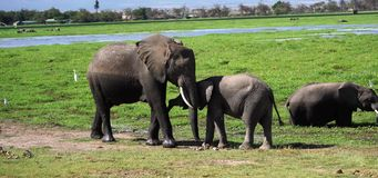 Elefantes de Kilimanjaro en el parque nacional Kenia de Amboseli fotos de archivo