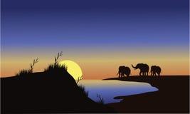 Elefantes de la familia de la silueta en la puesta del sol Fotografía de archivo