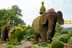 Elefantes de la planta Imágenes de archivo libres de regalías