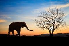 Elefantes de la silueta sobre puesta del sol fotos de archivo