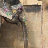 Elefantes decorados em Jaleb Chowk em Amber Fort em Jaipur, Indi Fotografia de Stock Royalty Free