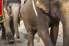 Elefantes decorados em Jaleb Chowk em Amber Fort em Jaipur, Indi Fotografia de Stock