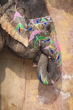Elefantes decorados em Jaleb Chowk em Amber Fort em Jaipur, Indi Fotos de Stock