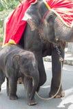 Elefantes del bebé y de la madre en parque zoológico Imagenes de archivo