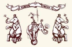 Elefantes del circo stock de ilustración
