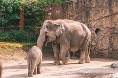 Elefantes del parque zoológico imagen de archivo libre de regalías