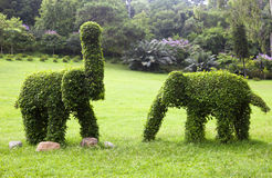 Elefantes del Topiary Fotografía de archivo libre de regalías
