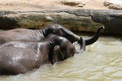 Elefantes do bebê na água Fotos de Stock Royalty Free