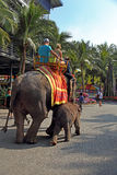 Elefantes do passeio dos jovens Fotos de Stock Royalty Free