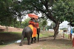 Elefantes do passeio dos visitantes para visitar a cidade antiga Imagem de Stock