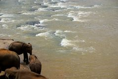 Elefantes do rio Fotos de Stock