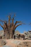 Elefantes e baobab Imagem de Stock